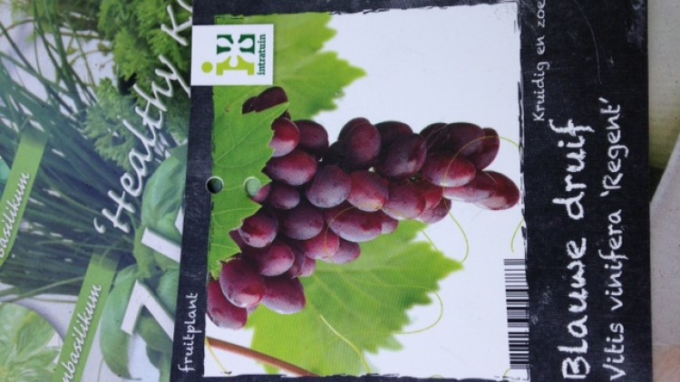 vitis vinifera of hybride? nee …. interspecifiek ras!